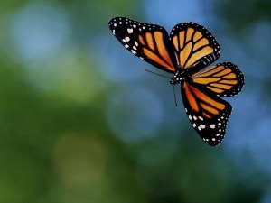 flying butterfly 4a